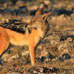 NAMIBIA---0186