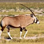 NAMIBIA---0196